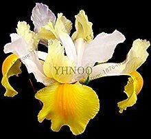 vegherb 17: 50Pcs / Bag Iris Orchidee Samen,
