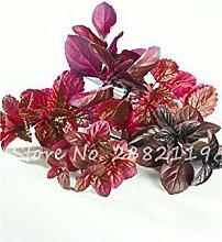 vegherb 2: 200 Stück Red Spearmint Mint Samen