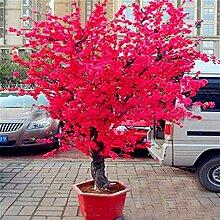 vegherb 20 / 50Pcs Bonsai-Baum japanischer
