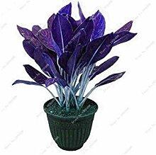 vegherb 200 Pc Schöne Mosaic Pflanzen Aglaonema