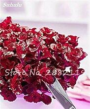 vegherb Mixed: 200 Stück Red Spearmint Mint Samen