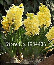 vegherb New Exotic 22 Art-Blumen-100