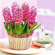 vegherb Rosa 1: Neue Exotic 22 Art-Blumen-100