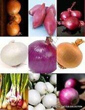 vegherb Zwiebel Mix Gemüse Gemischt seltenes