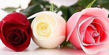 Verlust Förderung !!! 200pcs / bag seltene Farbe rosafarbene Samen Regenbogen blau stieg Home Garten ausdauernde Pflanze Blume exotische Bonsai Samen Mix