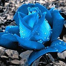 Verlust Förderung !!! 200pcs / bag seltene Farbe rosafarbene Samen Regenbogen blau stieg Home Garten ausdauernde Pflanze Blume exotische Bonsai Samen 4