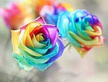 Verlust Förderung !!! 200pcs / bag seltene Farbe rosafarbene Samen Regenbogen blau stieg Home Garten ausdauernde Pflanze Blume exotische Bonsai Samen 9