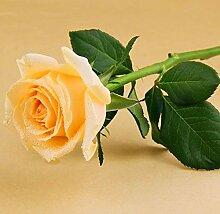 Verlust Förderung !!! 200pcs / bag seltene Farbe Samen Regenbogen blau rose Home Garten ausdauernde Pflanze Blume exotische Bonsai Samen 13
