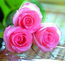Verlust Förderung !!! 200pcs / bag seltene Farbe Samen Regenbogen blau rose Home Garten ausdauernde Pflanze Blume exotische Bonsai Samen 10
