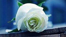 Verlust Förderung !!! 200pcs / bag seltene Farbe Samen Regenbogen blau rose Home Garten ausdauernde Pflanze Blume exotische Bonsai Samen 11