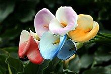 Verschiedene Farbe vergossen Calla Glühbirnen