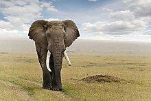 Violetpos Duschvorhang Elefant Badezimmer vorhang für bad Badvorhang 120 x 180 cm