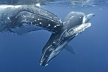 Violetpos Duschvorhang Ozeanwal süßes Tier Badezimmer vorhang für bad Badvorhang 180 x 200 cm