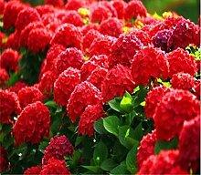 Virtue 10 teile/beutel Hortensien bonsai pflanzen,