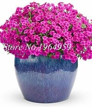 Virtue 100 Teile/beutel Bonsai Mixed Phlox Bonsai