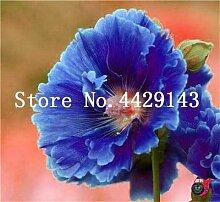 Virtue 100 Teile/los Doppel Hollyhock Blume