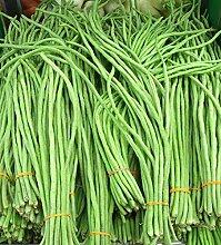 Virtue Yardlong Bean (Asparagus Bean, Snake Bean,