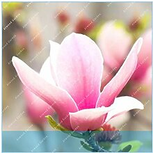 Virtue ZLKING 10 Stück Magnolia Raro Blumentopf