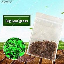 Virtue ZLKING 1000 stücke Aquatische Samen Gras