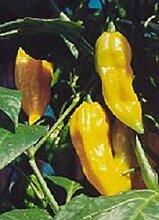 VISA STORE 25 ii Hot Pepper Samen Chili