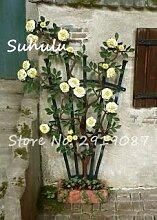 Vista 10 Stücke Seide Klettern Rose Blumensamen