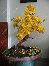 Vista 10 teile/beutel gelbe jasmin samen seltene