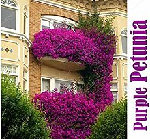 Vista 100 samen Topf blumensamen Garten Petunie