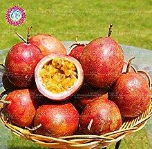 Vista 100 stücke Passionsfrucht samen Topf bonsai