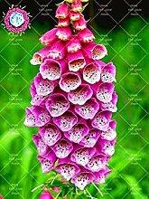 Vista 100 STÜCKE Seltene Farben Stile Fritillaria