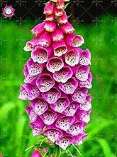 Vista 100 STÜCKE Seltene Fritillaria Fingerhut