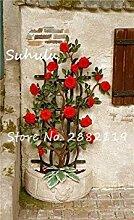 Vista 100 Stücke Seltene Klettern Rose