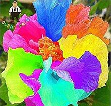 Vista 100 teile/beutel Hibiskus Blumensamen Riesen