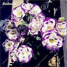 Vista 100 Teile/beutel Lila Eustoma Grandiflorum