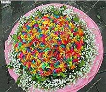 Vista 100 teile/beutel Seltene Regenbogen Rose
