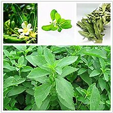 Vista 1000 neue Stevia Samen Stevia Rebaudiana
