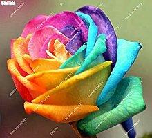 Vista 150 teile/beutel Heirloom Regenbogen Rose