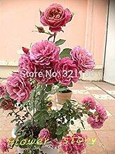 Vista 200 Mei Lang Lippenstift Rosensamen,
