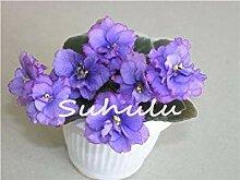 Vista 50 Stücke Mini Bonsai Veilchen Samen,
