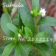 Vista 500 samen/bag Japanische Stevia-Samen,