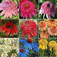 Vista BELLFARM Echinacea Gemischte 9 Farben Große