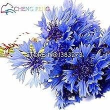 Vistaric 10 Blaue Blumensamen Schöne Farbe