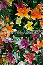 Vistaric 100 Stück Lilie Pflanzen Indoor Bonsai