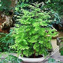 Vistaric 100 stücke/Garten Petunia samen Seltene