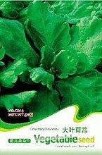 Vistaric 100 teile/beutel Chrysantheme Coronarium