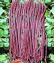 Vistaric 20 samen/pack Rote Bohnen Samen Für
