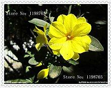 VISTARIC 200 Mei Lang Lippenstift Rosen Samen,