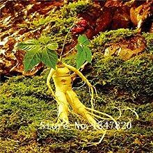 Vistaric 2016 bonsai ginseng samen 100 stücke 10