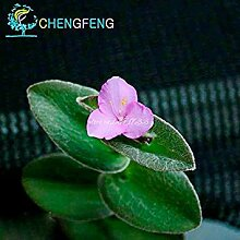 Vistaric 30 Teile/beutel Bonsai Pflanzen