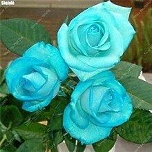 Vistaric 300 teile/beutel Exotische Rose Samen