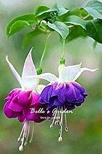 VISTARIC 4: Import Hydrangea-Blumensamen, Multi